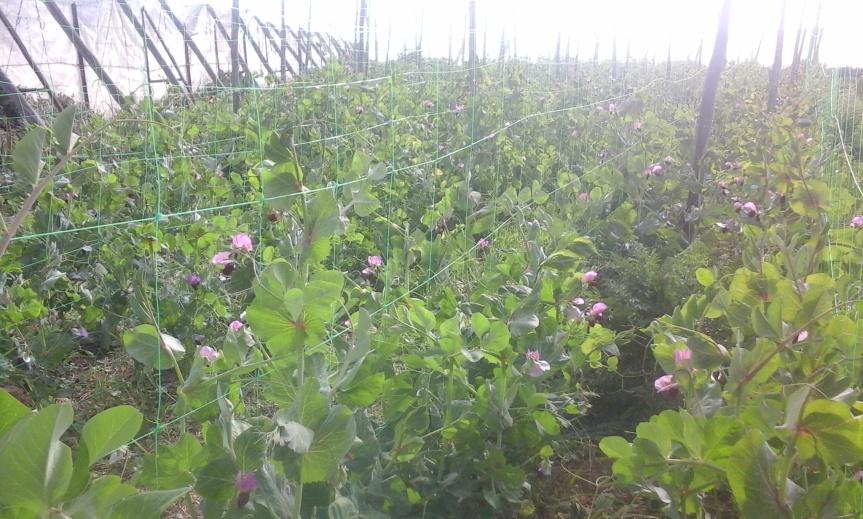 Agroecología bajo plástico,el reconocimiento al trabajo con latierra.